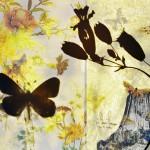 butterflies011